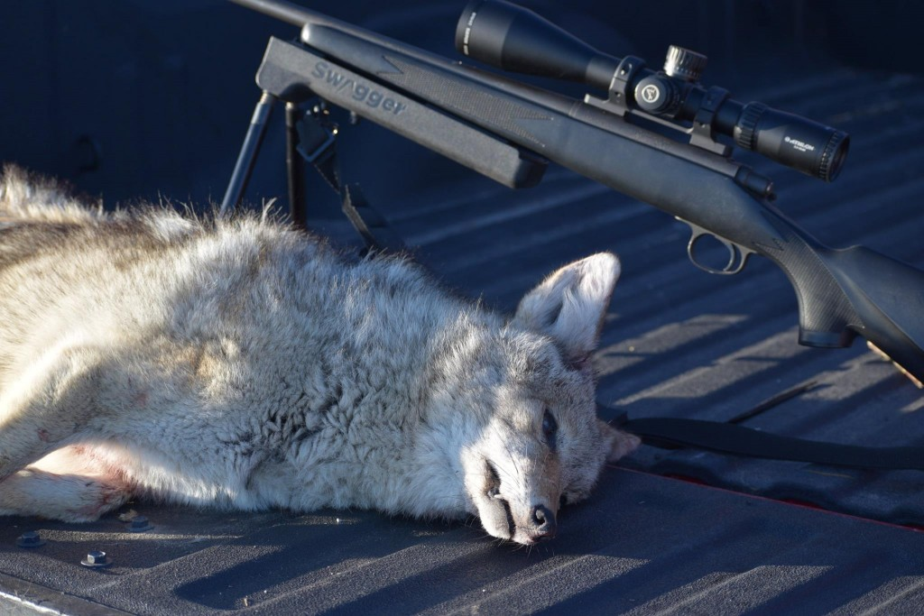 JustinWelch_Ares_Rifle_Scope_Coyote_Feb2017