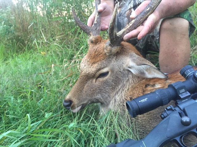 Athlon Optics: Nice Sika deer harvested by Gary in Ohio ...