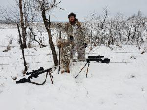 winter coyote
